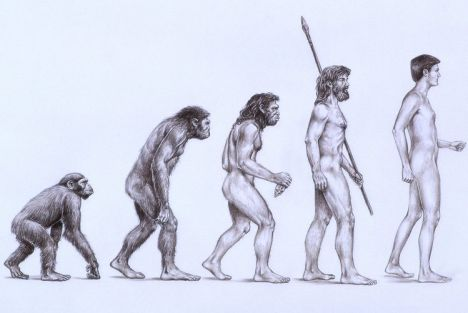 picture showing evolution of man